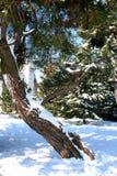 Ramas de árbol en un cielo azul durante invierno Imagen de archivo libre de regalías