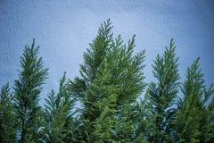Ramas de árbol en un fondo de una pared Fotografía de archivo libre de regalías