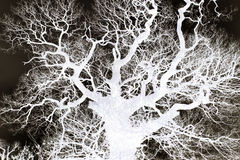 Ramas de árbol - extracto Imagenes de archivo