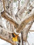 Ramas de árbol grandes con las banderas del amuleto Fotografía de archivo libre de regalías