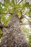 Ramas de árbol grandes y altas fotos de archivo libres de regalías