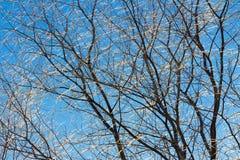 Ramas de árbol heladas contra el paisaje del invierno del cielo azul foto de archivo libre de regalías
