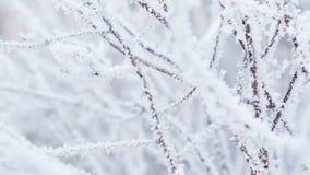 Ramas de árbol heladas en el movimiento de la cacerola del invierno metrajes