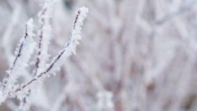 Ramas de árbol heladas en el movimiento de la diapositiva del invierno almacen de video