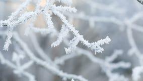 Ramas de árbol heladas en el movimiento de la diapositiva del invierno almacen de metraje de vídeo