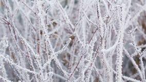 Ramas de árbol heladas en el movimiento de la diapositiva del invierno metrajes