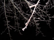 Ramas de árbol heladas en la noche imagenes de archivo