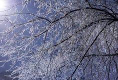 Ramas de árbol heladas en la noche en invierno Foto de archivo libre de regalías