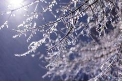 Ramas de árbol heladas en la noche en invierno Imagen de archivo libre de regalías