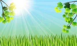 Ramas de árbol, hierba y el sol Imagen de archivo libre de regalías
