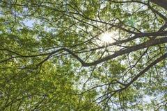 Ramas de árbol iluminadas por el sol de debajo Foto de archivo libre de regalías