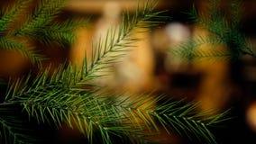 Ramas de árbol de navidad cada vez mayor almacen de metraje de vídeo