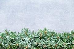 Ramas de árbol de navidad en un fondo brillante Foto de archivo