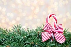 Ramas de árbol de navidad en un fondo brillante Fotografía de archivo libre de regalías