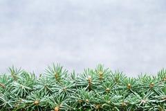 Ramas de árbol de navidad en un fondo brillante Imágenes de archivo libres de regalías
