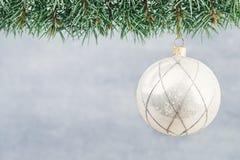 Ramas de árbol de navidad en un fondo brillante Fotos de archivo