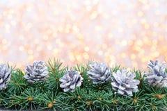 Ramas de árbol de navidad en un fondo brillante Fotos de archivo libres de regalías