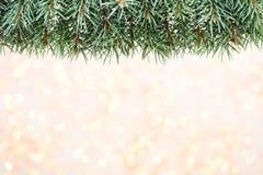 Ramas de árbol de navidad en un fondo brillante Foto de archivo libre de regalías