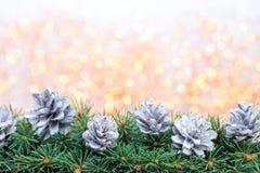 Ramas de árbol de navidad en un fondo brillante Imagen de archivo