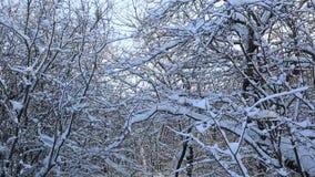 Ramas de árbol nevadas hermosas en parque del invierno Es la construcción de acero del cedazo libre más alto del mundo almacen de video
