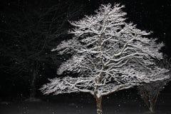Ramas de árbol nevadas iluminadas contra el negro de la noche Imágenes de archivo libres de regalías
