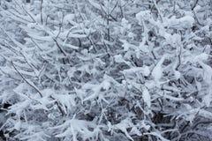 Ramas de árbol nevadas para el fondo Foto de archivo libre de regalías