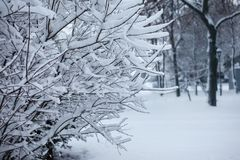 Ramas de árbol nevadas para el fondo Fotografía de archivo libre de regalías