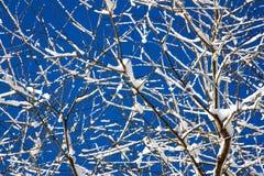 Ramas de árbol Nevado Foto de archivo libre de regalías