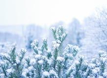 Ramas de árbol Nevado de árboles de navidad Imagen de archivo