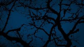Ramas de árbol nudosas antiguas en noche tempestuosa almacen de video