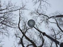 Ramas de árbol secas contra ramas de árbol secas del cielo gris del invierno y silueta de la lámpara en fondo del cielo fotografí foto de archivo libre de regalías