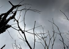Ramas de árbol secas contra el cielo gris Imágenes de archivo libres de regalías