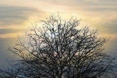 Ramas de árbol sin fondos de la licencia Fotos de archivo