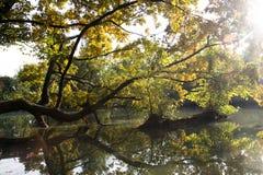 Ramas de árbol sobre el agua Imagen de archivo