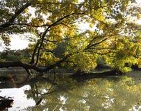 Ramas de árbol sobre el agua Fotos de archivo