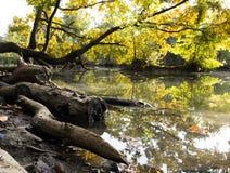 Ramas de árbol sobre el agua Foto de archivo libre de regalías