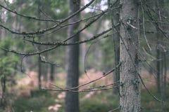 ramas de árbol spruce contra el fondo oscuro - mirada de la película del vintage Imagen de archivo libre de regalías