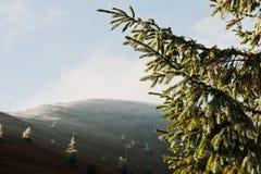Ramas de árbol Spruce del Año Nuevo en luz del sol en la mañana en la montaña Fotos de archivo