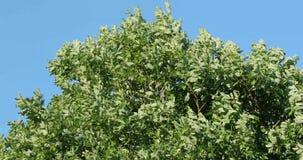 Ramas de árbol verdes en el verano contra el cielo almacen de metraje de vídeo