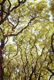 Ramas de árbol verdes enormes El sol caliente de la primavera brilla a través de los árboles Hojas verdes gruesas, paisaje al air imágenes de archivo libres de regalías