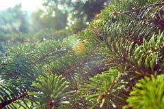 Ramas de árbol y luz del sol Foto de archivo