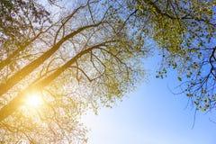 Ramas de árbol y Sun brillante Imagen de archivo