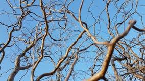 Ramas de árboles Imagen de archivo
