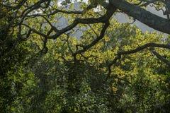 Ramas de árboles con la luz fotografía de archivo