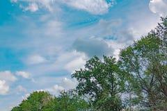 Ramas de árboles contra el cielo fotografía de archivo