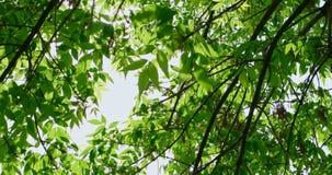 Ramas de árboles delante del cielo almacen de metraje de vídeo