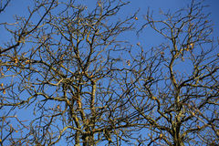 Ramas de árboles desnudos Imagen de archivo libre de regalías