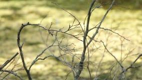 Ramas de árboles sin las hojas en otoño en un fondo de la hierba verde metrajes