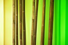 Ramas de bambú Fotografía de archivo libre de regalías