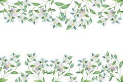 Ramas de florecimiento de la bergamota, de las flores blancas de la acuarela en ramas con verde y de las hojas Bandera de la acua stock de ilustración